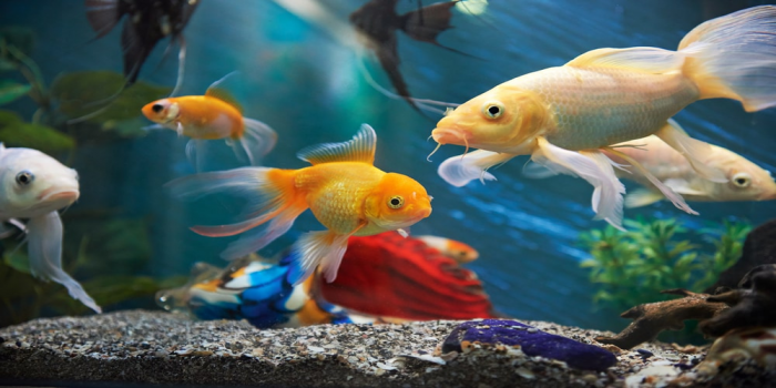 The 6 Most Expensive Aquarium Fish in the World