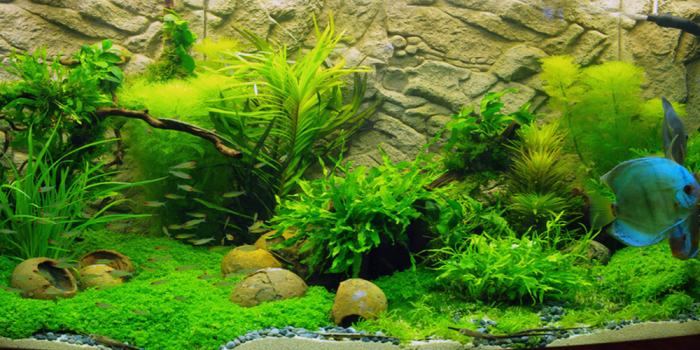 How do You Keep Live Plants in an Aquarium