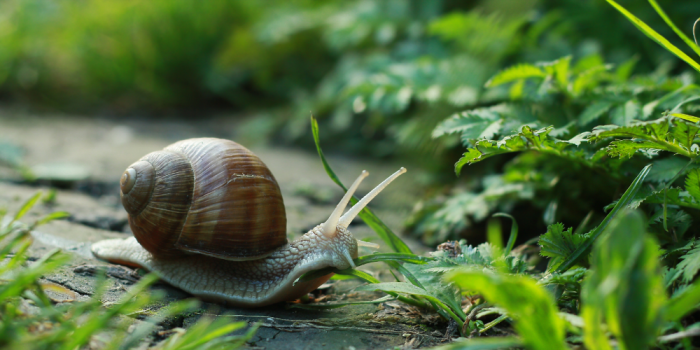 Choosing the Right Snails for Your Freshwater Aquarium