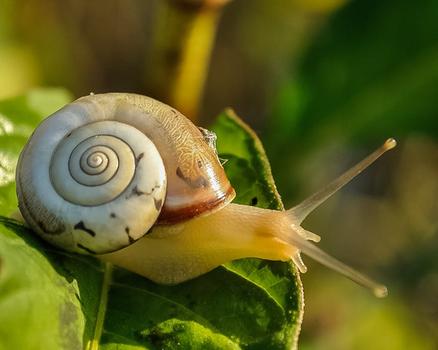 Can You Keep a Snail as a Pet